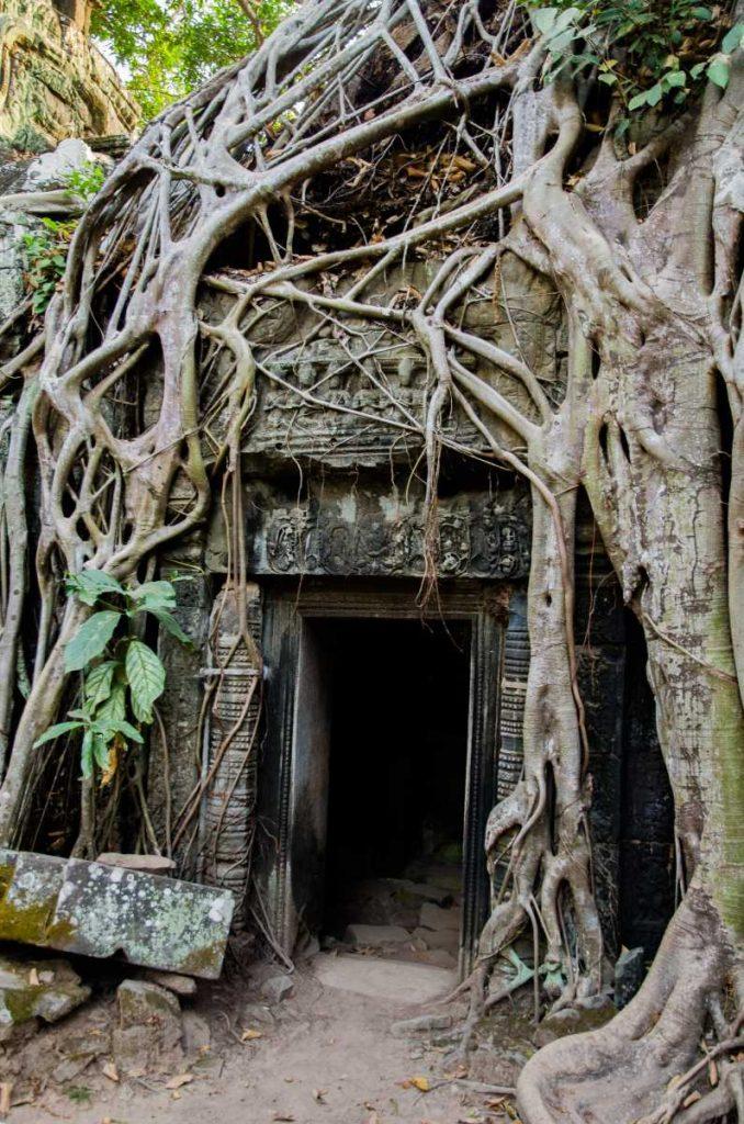 Cambodge - Angkor - Ruines du temple de Ta Prohm