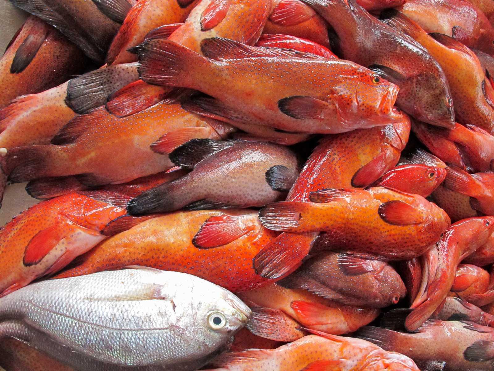 Cap-Vert - Pêche du jour au marché aux poissons de Mindelo
