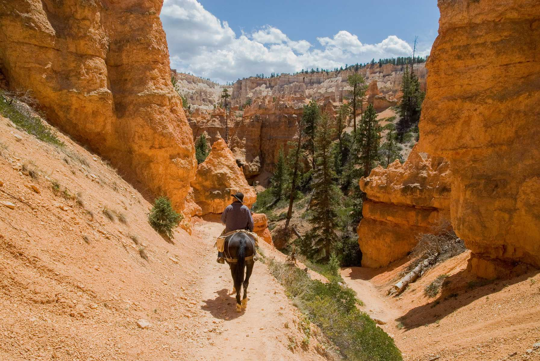 Etats-unis - Parcs de l'Utah - Les cheminées de fée de Bryce Canyon doivent leur couleur rouge aux oxydes de fer déposés il y a 50 millions d'années au fond d'un ancien lac d'eau salé.