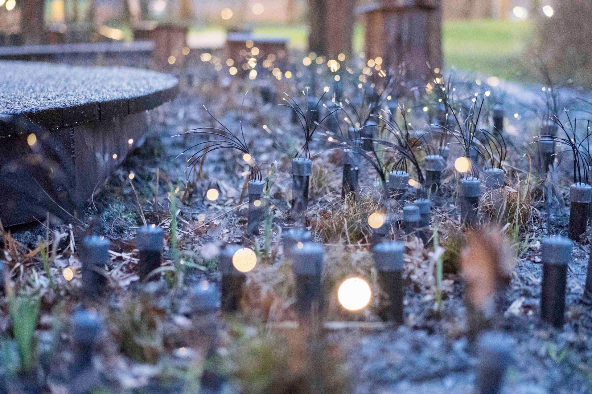 Les lumières magiques illuminées par l'électricité du sol dans un parc à Rotterdam. Photo Robert B. Fishman