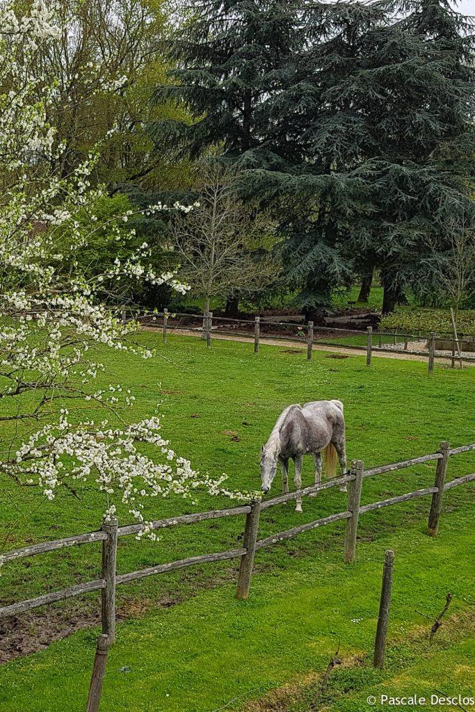 Cheval au pré, Domaine de Poulaines à Poulaines, près de Valençay, Berry