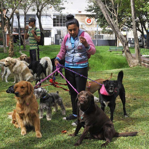 Colombie - Promeneurs de chien dans le quartier de Zona Rosa à Bogota