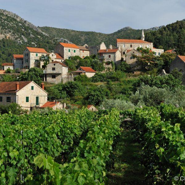 Le village de Pitve au creux des vignes à Hvar.