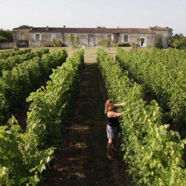 Dans les vignes du Logis