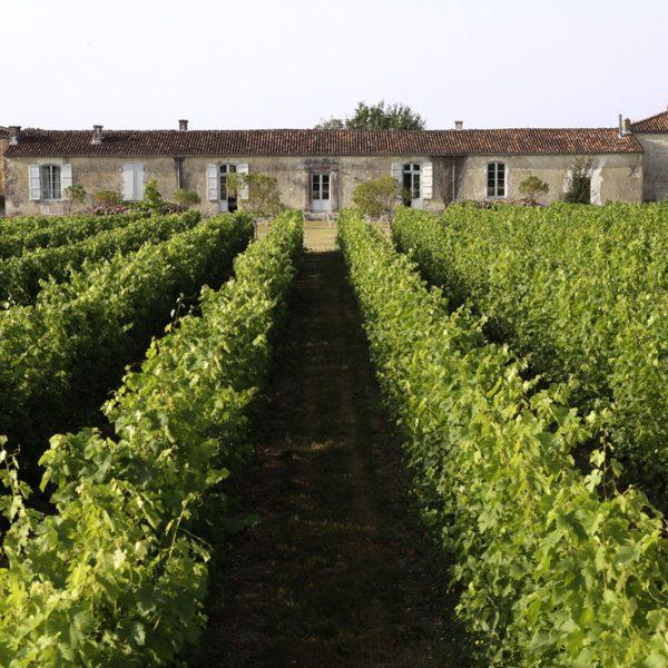 Le vignoble de 4,5 ha.