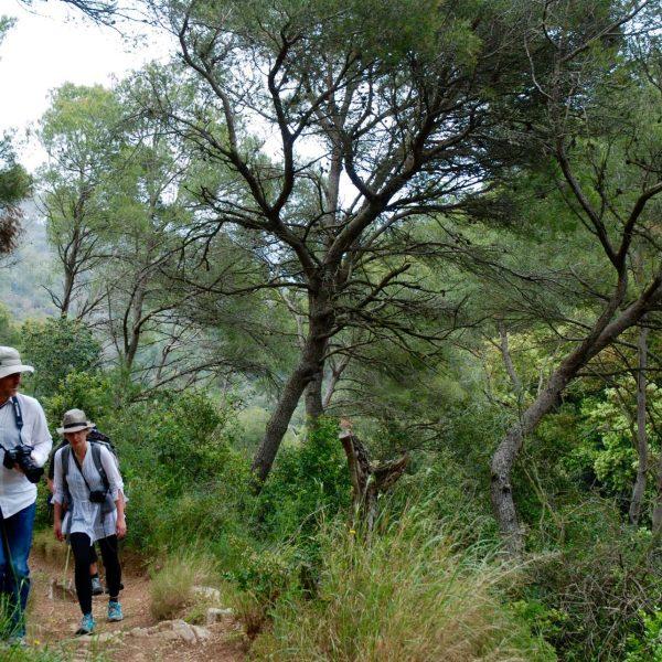 Espagne - Costa Brava - Forêt méditerranéenne.
