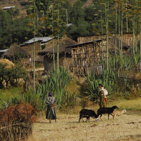 Ethiopie - Village au pied de Lalibela.