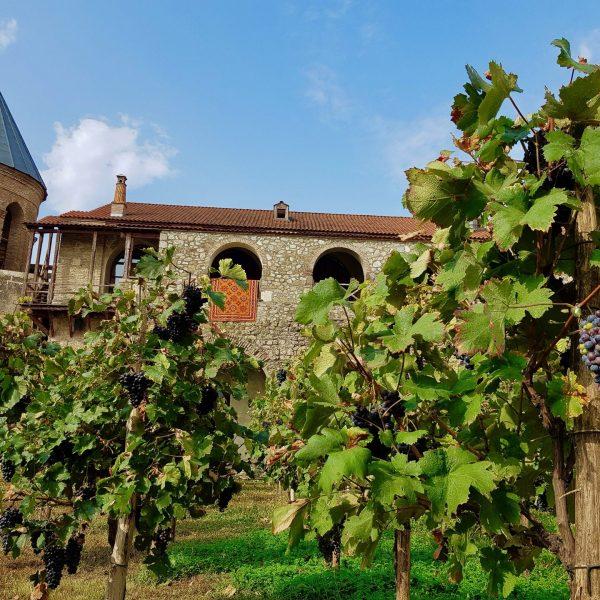 Au coeur de la Kakhétie, la culture de la vigne est partout présente, même dans le monastère d'Alaverdi.
