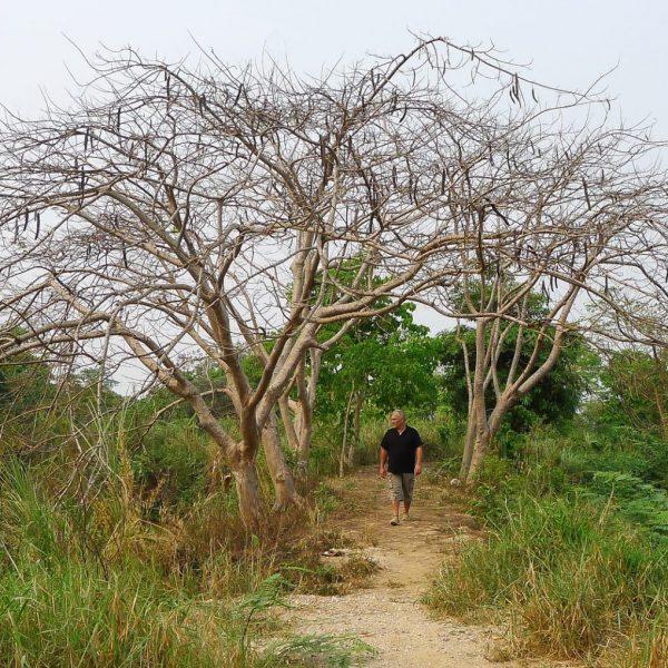 Gérard Cambon - Sculpteur - A la recherche de graines en Thailande