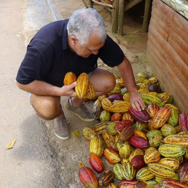 Gérard Cambon - Sculpteur - Récolte de cabosses de cacao