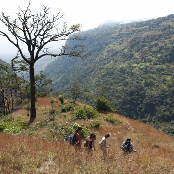 Dans la brousse entre Doughéa et Yembérulé