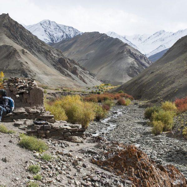 Bouquetins en vue dans la vallée de la Markha