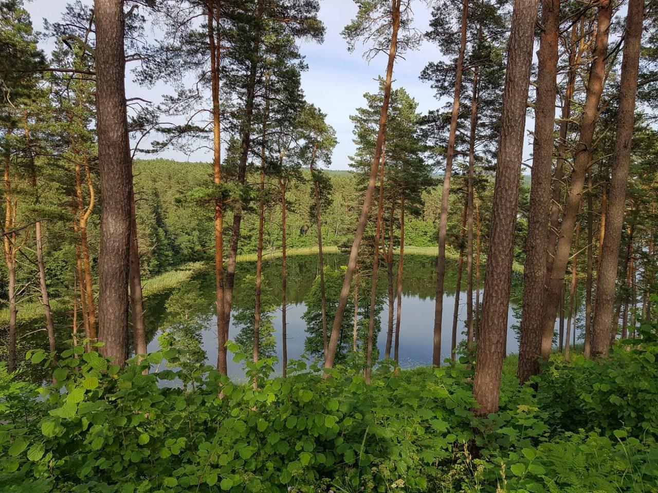 lituanie-parc-national-aukstaitija-lac-foret