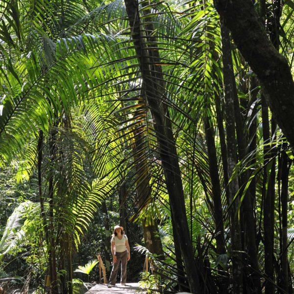 Panama - Sur les sentiers du Soberania National Park.